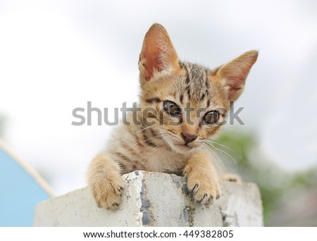 Striped kitten looking at the camera innocent look - stock photo