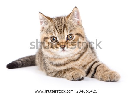 Striped kitten lying down and looking at the camera (isolated on white) - stock photo