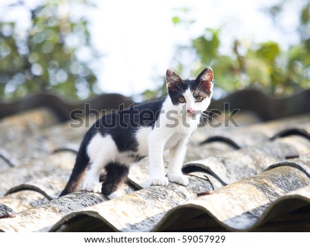 striped kitten on the roof - stock photo