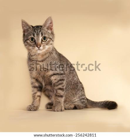 Striped kitten sitting on yellow background - stock photo