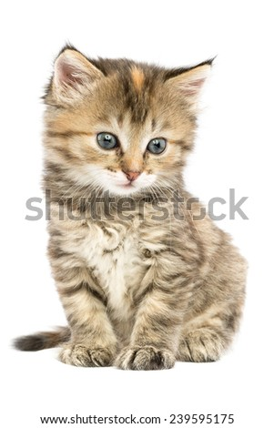 Striped kitten sitting with astonishment looks in the side down - stock photo