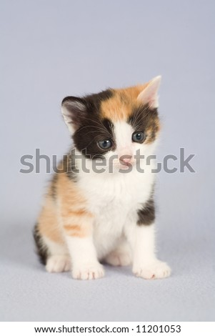 striped kitten standing on the floor, isolated