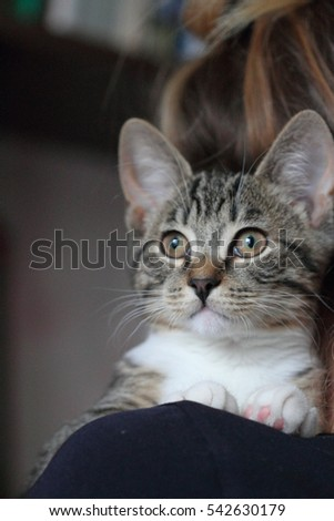 striped kitten - the favourite on a shoulder at the daughter