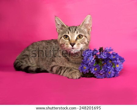 Striped kitten with bouquet of flowers lying on pink background