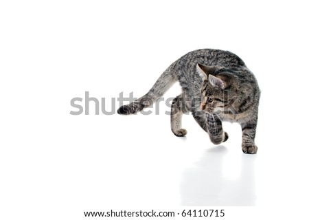 Striped kitten with white speck