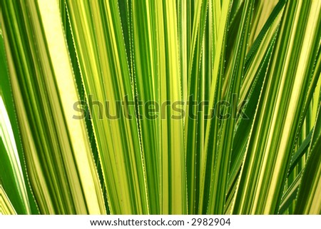 Striped leaves - stock photo