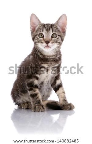 Striped not purebred kitten. Kitten on a white background. Small predator. Small cat. - stock photo