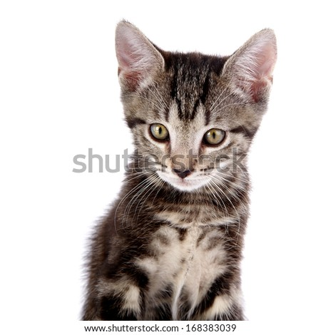 Striped not purebred kitten. Kitten on a white background. Small predator. Small cat.