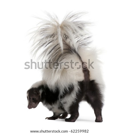 ... years old, standing in front of white background - stock photo