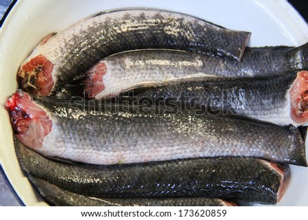 Striped snakehead fish for grill .