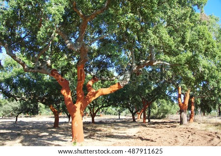 Stripped Cork Trees  at Portugal