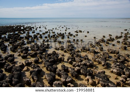 Stromatolites - stock photo