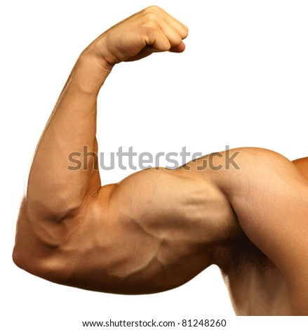 strong biceps on a white background - stock photo