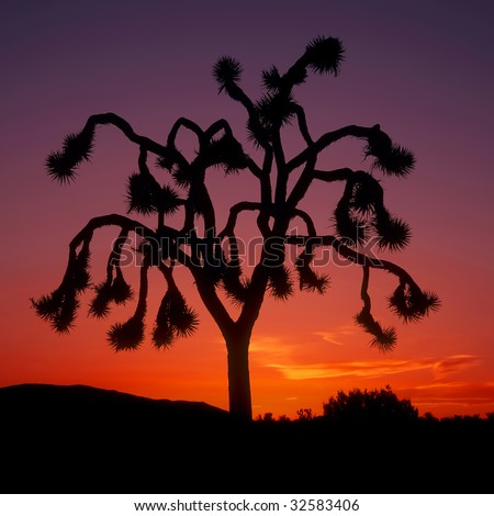 Strong graphic silhouette of single Joshua tree against orange and purple sunset; square format - stock photo