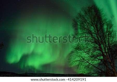 strong green aurora borealis dancing on night sky behind trees
