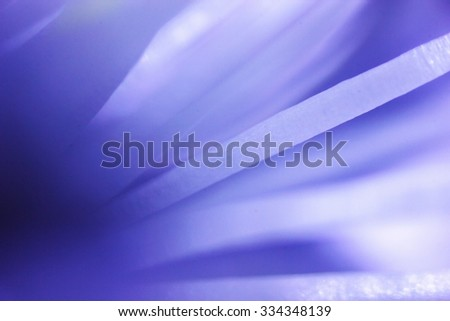 strong increase in apricot flower under the microscope - stock photo
