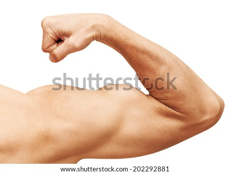 Strong male arm shows biceps. Close-up photo isolated on white - stock photo
