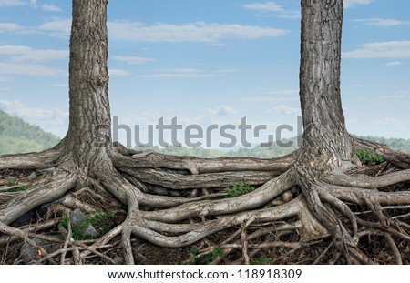 Strong partnership and foundation as a business concept of stability and loyalty with two trees with roots connected together as a symbol of agreement and merging forces together for success. - stock photo