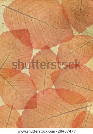 Structure of autumn leaves on an old paper. A retro style.