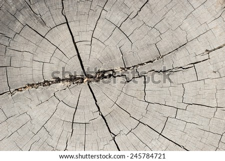 structure of the saw cut log in the background - stock photo