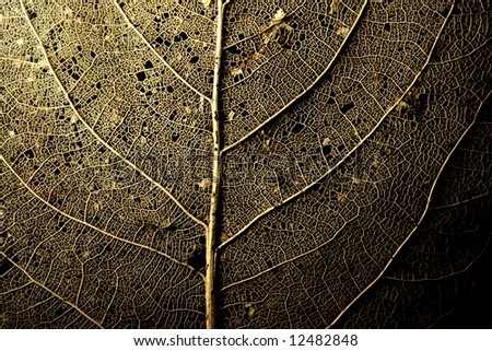 structure or a deteriorated leaf - stock photo