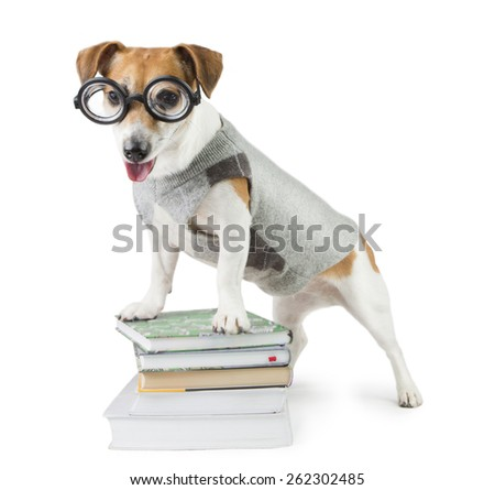 Student pupil dog Jack Russel terrier and a stack of books. Study and teaching - stock photo