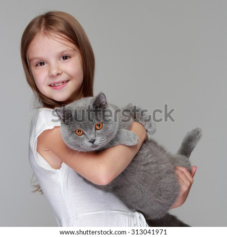 Studio image of a cheerful little girl played with a British breed of cat on a gray background