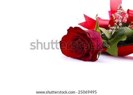 Studio isolated red rose