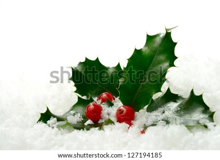Studio macro of fresh holly leaves and berries in soft snow. Copy space. - stock photo