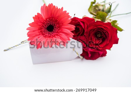 Studio macro of mother's day flowers with soft shadows against a white background - stock photo