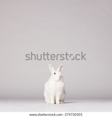 Studio photo of white rabbit on white background - stock photo