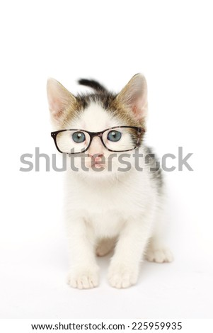 Studio photo on white of a white grey and brown tabby kitten (6 weeks old) wearing glasses.) - stock photo