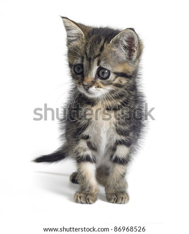 Studio photography of a cute kitten isolated on white - stock photo