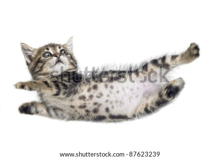 Studio photography of a falling down kitten isolated on white - stock photo