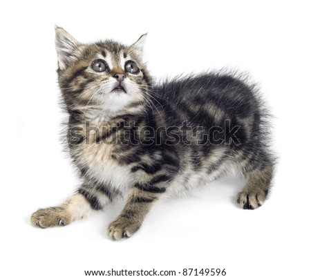 Studio photography of a frightened kitten isolated on white - stock photo