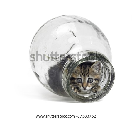 Studio photography of a kitten inside a glass bottle while looking out - stock photo