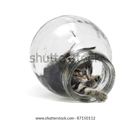 Studio photography of a kitten playing inside a glass bottle, isolated on white - stock photo