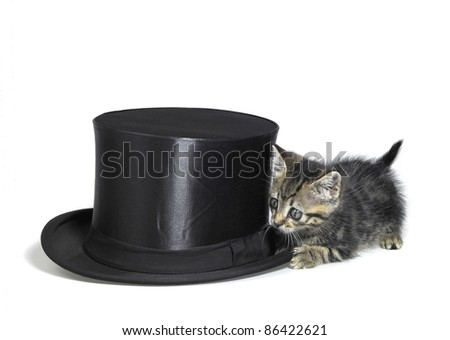 Studio photography of a kitten sneaking around a black top hat, isolated on white - stock photo