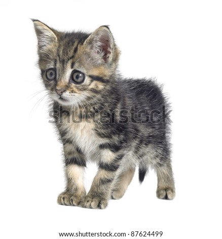 Studio photography of a needy cute kitten isolated on white