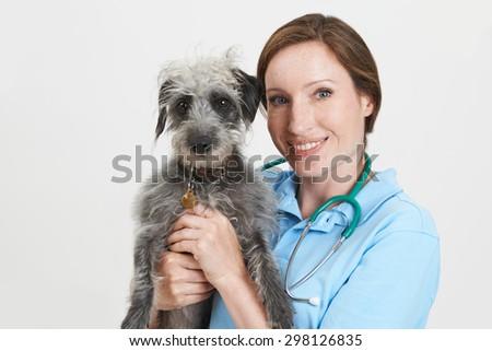 Studio Portrait Of Female Veterinary Surgeon Holding Lurcher Dog - stock photo