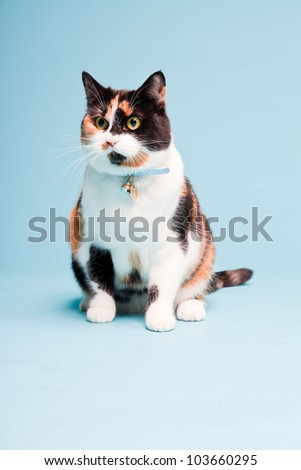 Studio portrait of spotted domestic cat isolated on light blue background