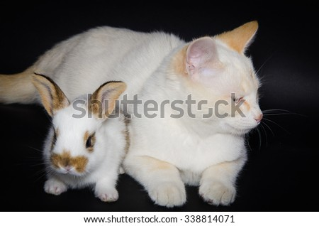 Studio portrait of white cat and baby bunny isolated on black background. - stock photo