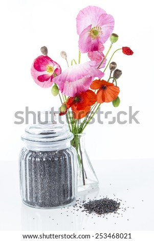 Studio setup of pink and red colored poppy flowers in glass vase with poppy seeds in glass jar. Isolated on white background.  - stock photo