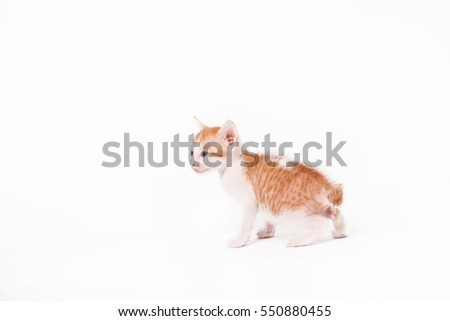 Studio shoot of baby kitten