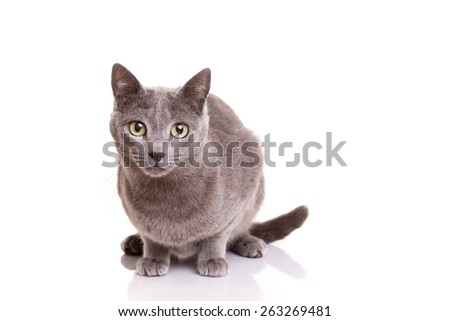 Studio shot of a beautiful young cat - stock photo