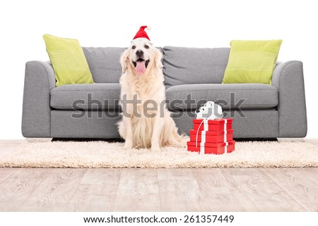 Studio shot of a dog with Santa hat sitting by a sofa isolated on white background - stock photo