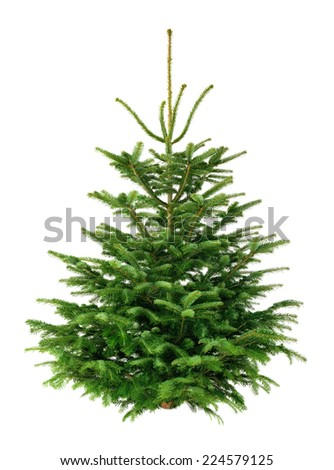 Studio shot of a fresh gorgeous fir tree for Christmas, without ornaments, isolated on pure white - stock photo