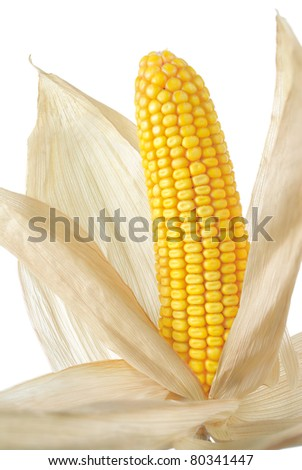 Studio shot of a nice corn cob with its dried husk - stock photo