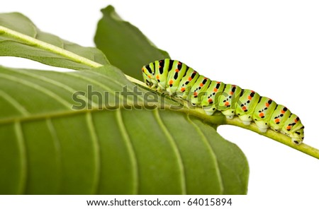studio shot of butterfly larva isolated on white - stock photo