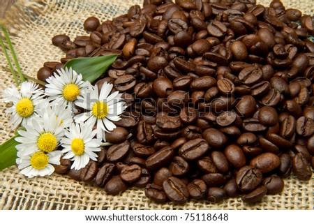 Studio Shot of Coffee Beans - stock photo
